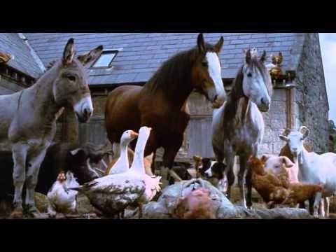 30 best Teaching - Animal Farm images on Pinterest Farm unit, Ap - animal specialist sample resume