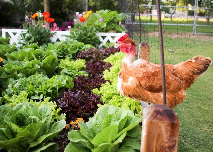 find this pin and more on vegetable garden ideas - Kitchen Garden Ideas