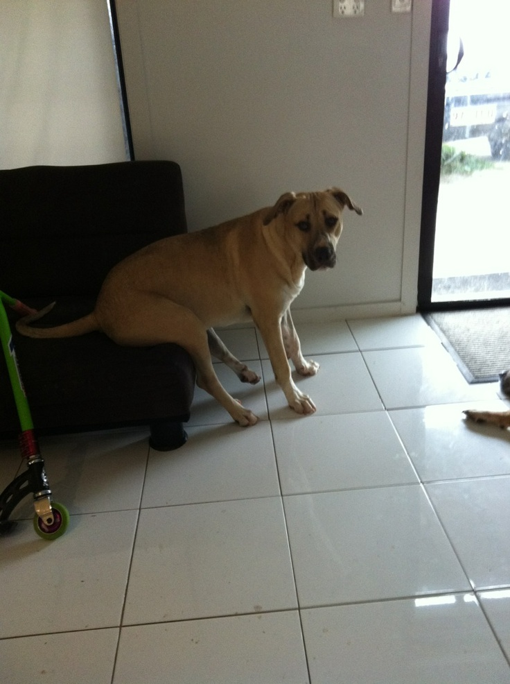 tonka sitting, funny really thinks this is how to sit