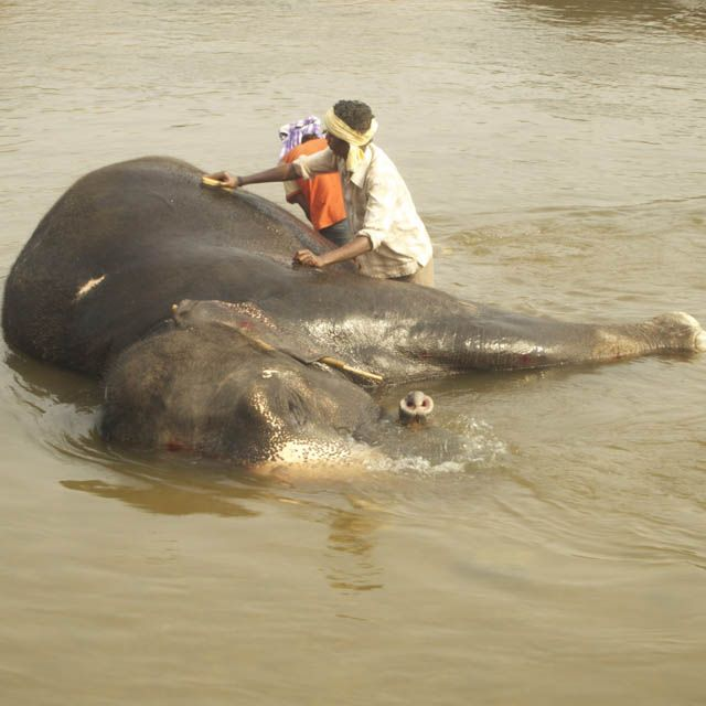 Elephant bath, India