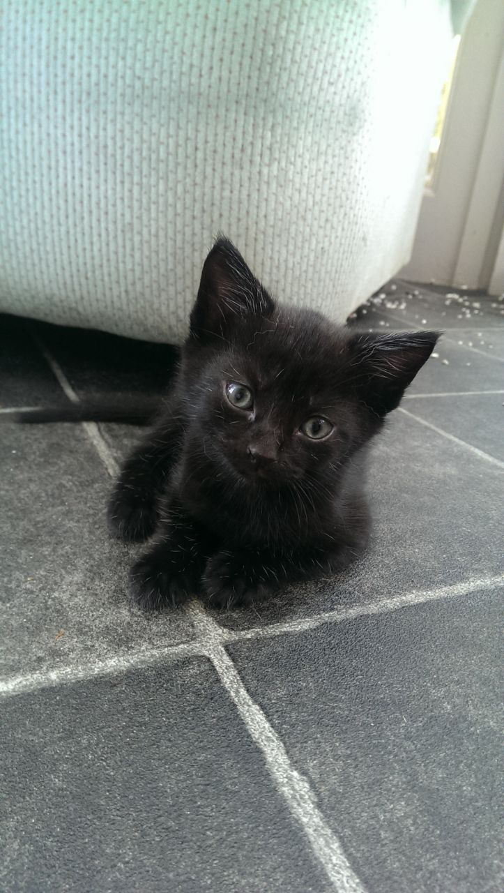 9 Week Old Kitten Cats Kittens Cutest Pretty Cats