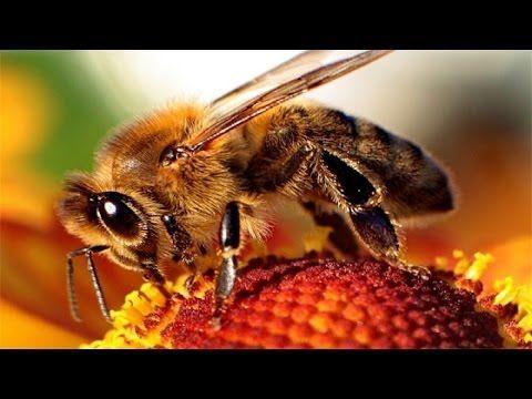 Пчелиный подмор рецепты! - YouTube
