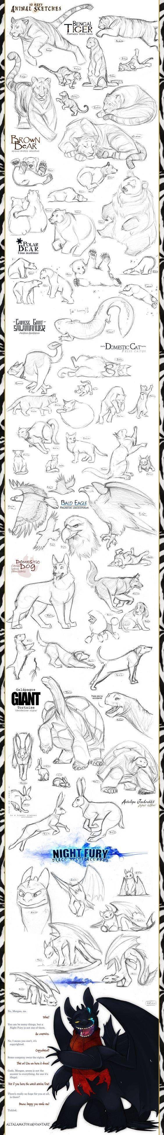 dibujar animales animados 3