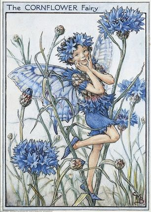 llustration for the Cornflower Fairy from Flower Fairies of the Garden.   Author / Illustrator  								Cicely Mary Barker