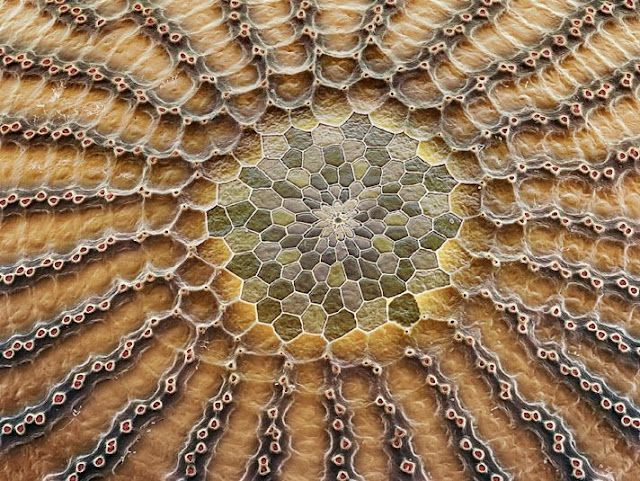 Butterfly eggs: Photos Galleries, Inspiration, Electronics Microscope, Mosaics Patterns, Insects, Owl Butterflies, Butterflies Eggs, Close Up, Closeup