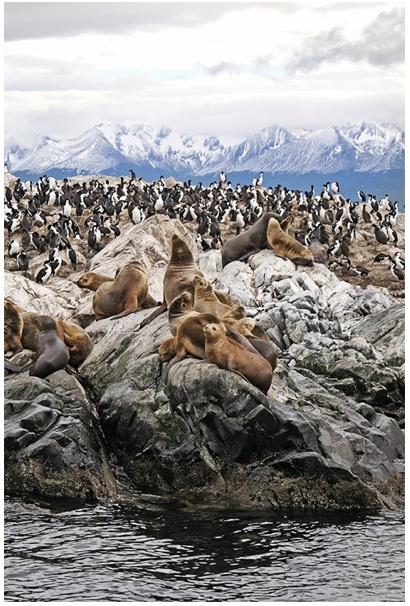 Argentina. Seals and Penguins :D