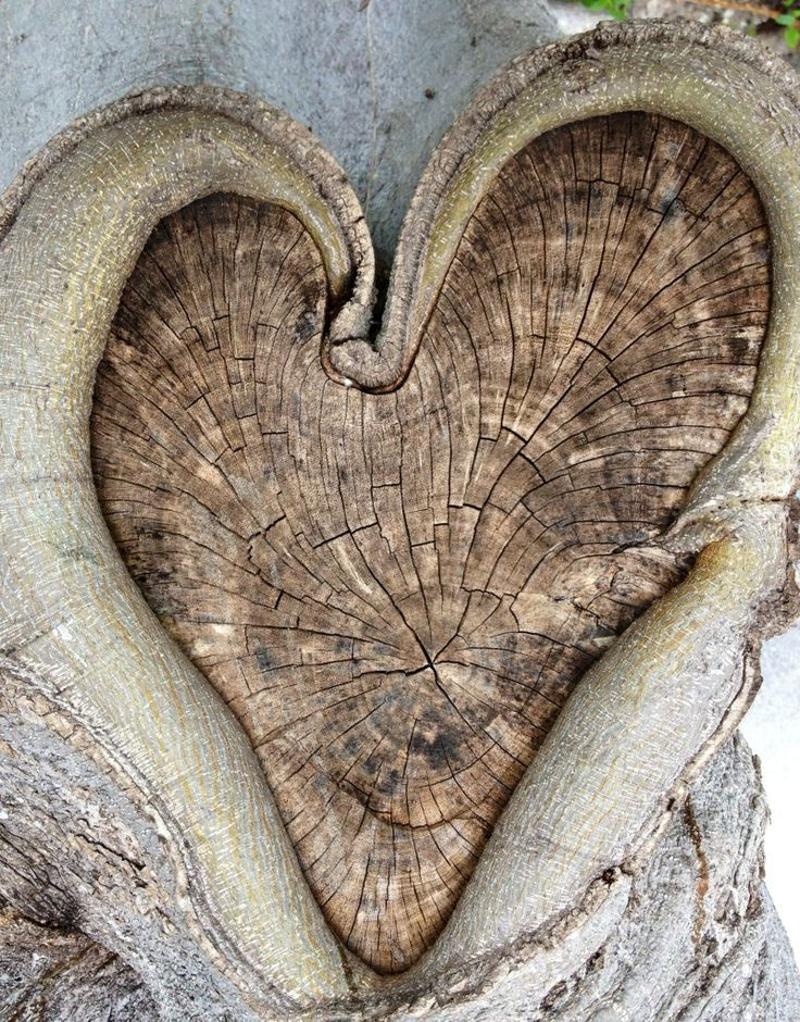 Designed by Nature. Heart-shaped tree knot. Photo taken by my son Kyle.