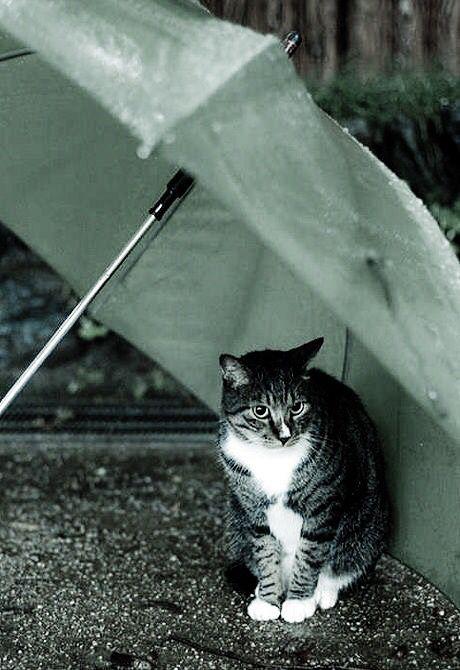 Vieni sotto l'ombrello che piove, ripararti è un dovere preciso. Non ho molto da aggiungere a quello che ho scritto che non predisponga il sorriso. Enrico Ruggeri