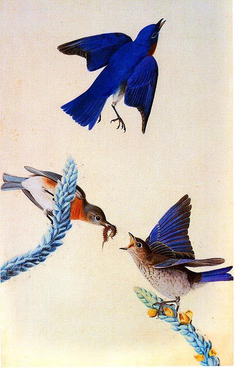 State birds - John James Audubon Painting 30.jpg