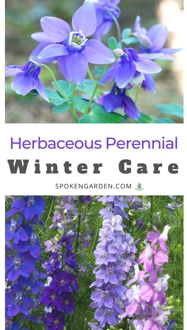 Herbaceous Perennial Plant Care Ideas Fall And Winter Garden