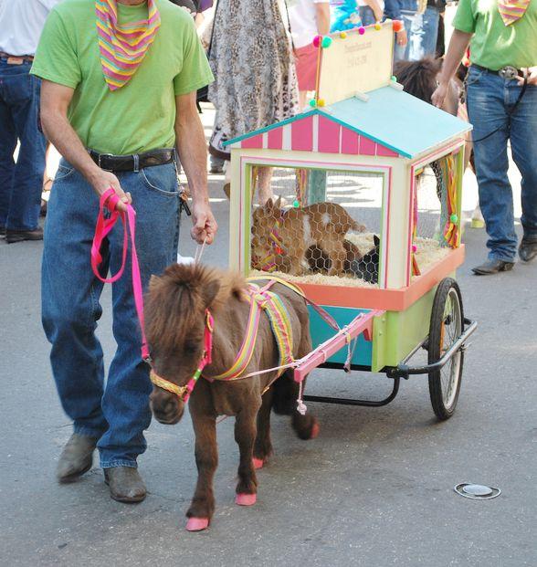 Rowdy's Rascals Miniature Horse Events