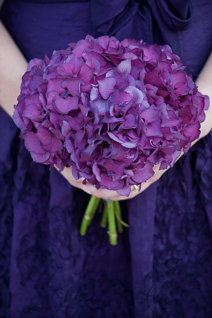 This is the color of hydrangea I'd like to use in your centerpieces. This with red roses.