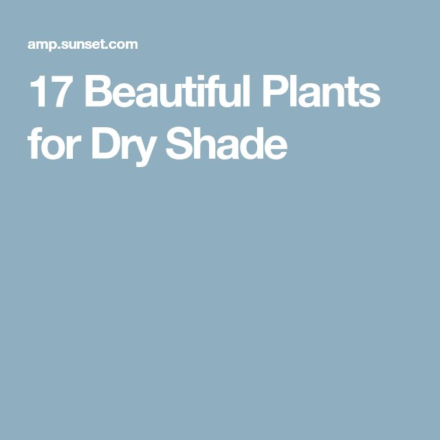 17 Beautiful Plants for Dry Shade