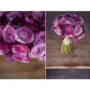 Purple Ranuculus for the my + my bridesmaid's bouquets