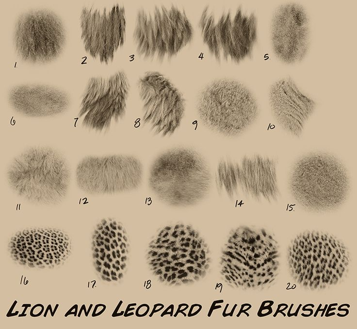 Brushes For Character Design : Best images about creature anatomy fur on pinterest
