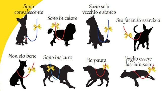 Perché legare un nastrino giallo al guinzaglio del cane