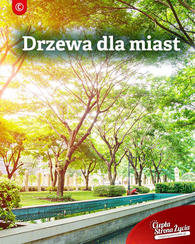 Trzymamy kciuki, by drzew w mieście było coraz więcej i zachęcamy do inicjatyw lokalnych, które pomogą stworzyć w waszej okolicy choćby malutką  zieloną oazę. W miastach zieleni i drzew brakuje, a przecież ich obecność powoduje znaczący wzrost jakości życia. Nie dość, że oczyszczają powietrze, to jeszcze je dotleniają - przyznacie sami, że na zielonych osiedlach powietrze pachnie inaczej, niż w centrach miast. Co więcej dzięki drzewom, możemy w mieście usłyszeć śpiew ptaków, które w ich ....