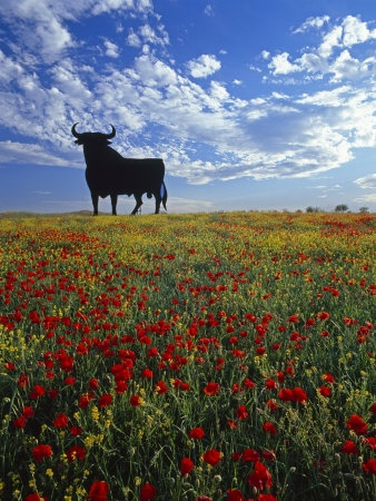 One of the best known symbols along roadways in Spain! Giant Bull, Toros de Osborne, Andalucia, Spain by Gavin Hellier