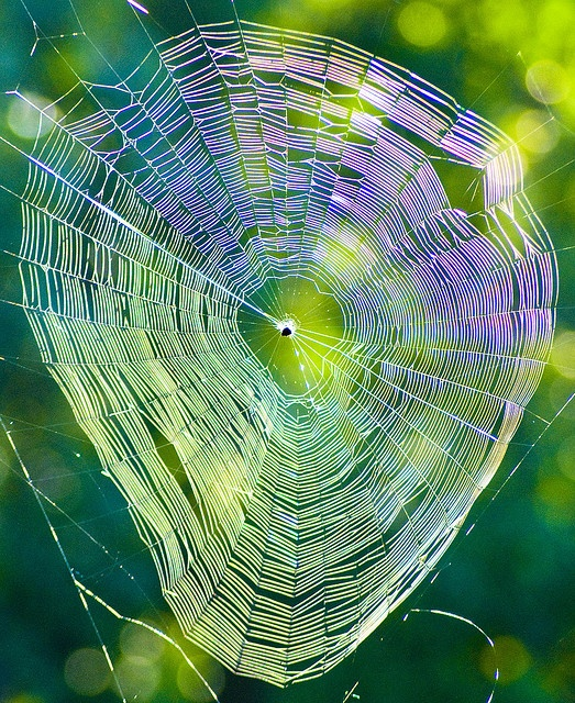 spider web -- iridescent