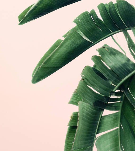 Palm Leaves, Banana Leaf Print, Tropical Decor, Tropical