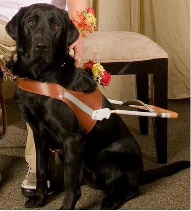 17 Best Images About Guide Dogs For The Blind On Pinterest