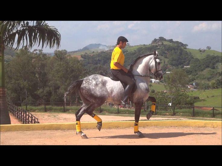 Descoberto o cavalo que recebeu vacina contabilizada como gasto para a saúde em Minas