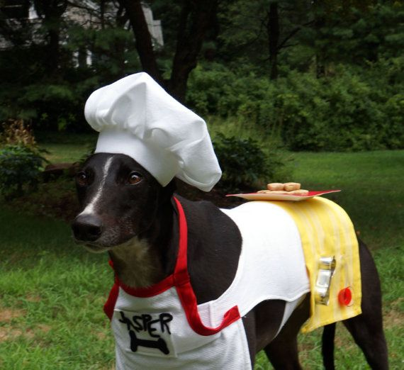 Greyhounds, Chefs and Costumes on Pinterest