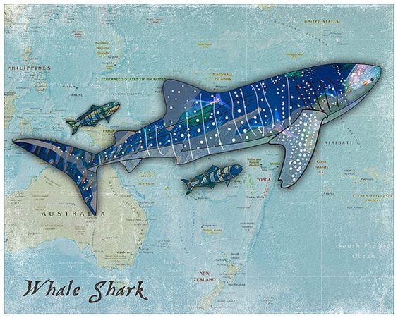 The Loveable Whale Shark Super Cool Trendy Wall Art Print