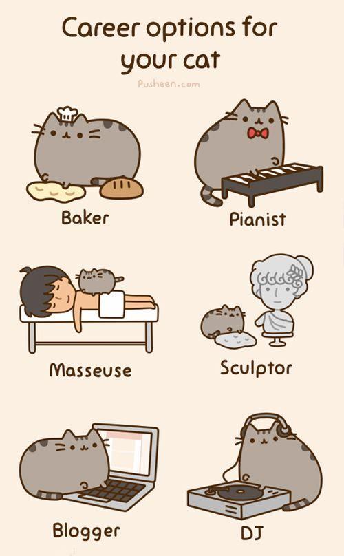 Opciones de carreras para tu gato :)
