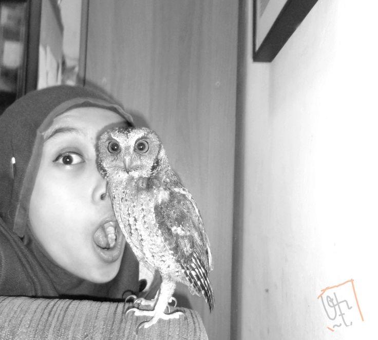 Waaaa ada kuntilanak! #owl #owls #celepuk #javanscopsowl #scopsowl #indonesia