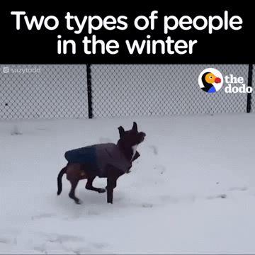 Im Winter gibt es zwei Arten von Menschen Lustige Bilder, Sprüche, Witze, e …   – smieszne