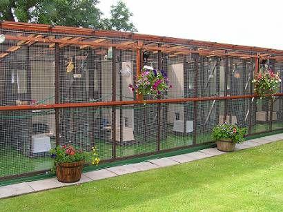 Cat kennel - business opp?