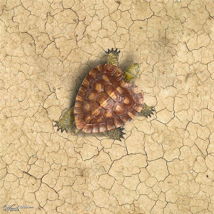 ❣♡❣ Turtle heart ❣♡❣