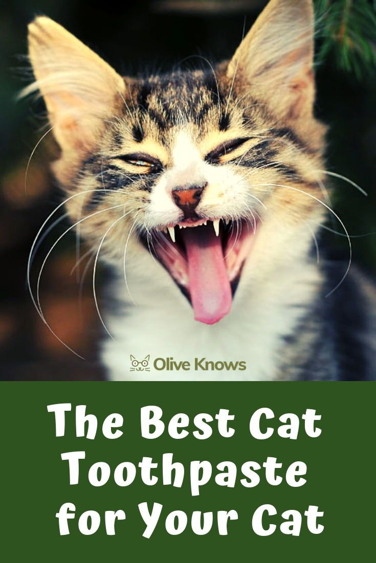 The Best Cat Toothpaste For Your Cat Oliveknows Cats Cat Illnesses Cool Cats