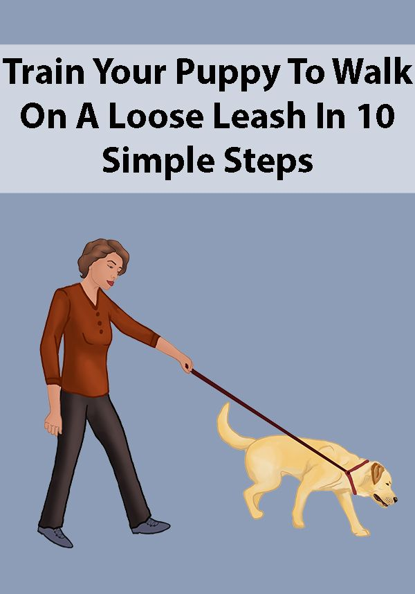 Teaching Your Puppy To Walk On A Leash Puppy Training Training Your Puppy Dog Training Obedience