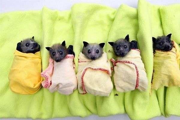Cuccioli di pipistrello: ecco i più teneri (Foto) | Tutto Gratis