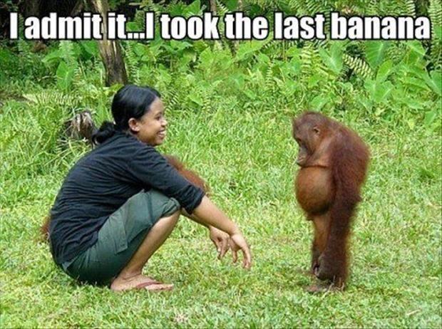 funny-animal-pictures-ape-took-the-last-banana1.jpg 620×462 pixels