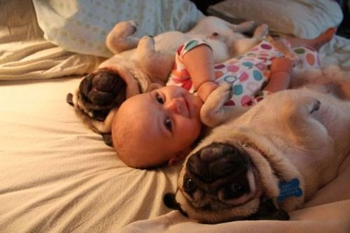 how freaking cute is this!Friends, Little Puppies, Funny Dogs, Funny Pictures, Funnydogs, New Baby, Pugs Life, Baby Pugs, Animal