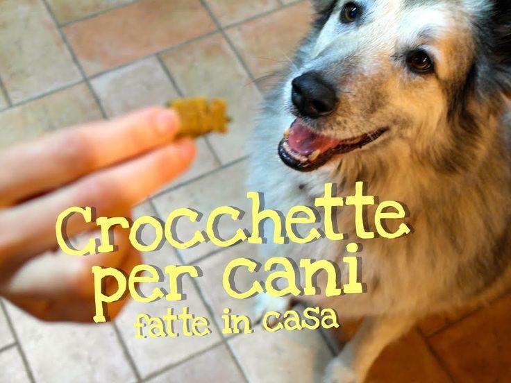 Oltre 1000 idee su Cibo Per Cani Fatto In Casa su Pinterest  Ricette di cibo per cani, Cane ...