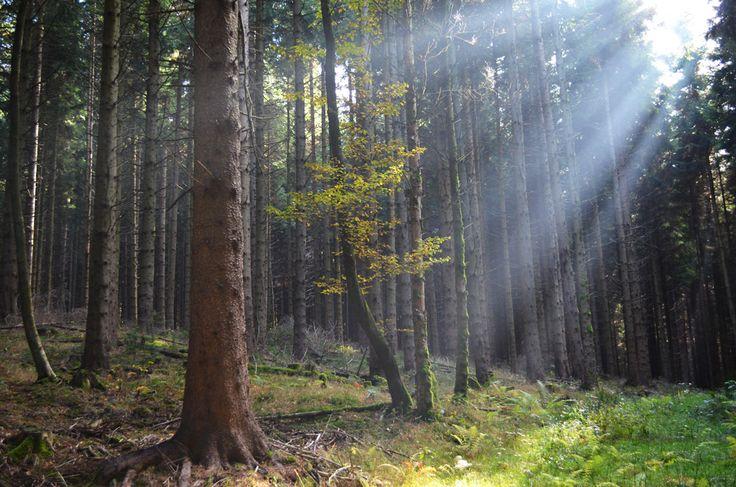 https://flic.kr/p/AXDxpn | Sunlight in the Black Forest, Germany
