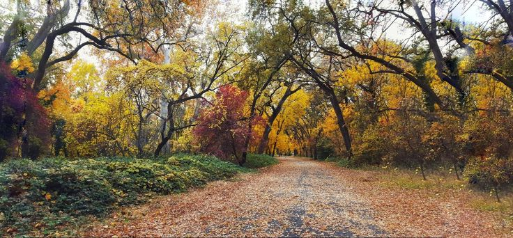 A walk in Chico California [1440x2560] [OC]
