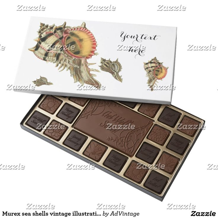 Murex sea shells vintage illustration assorted chocolates