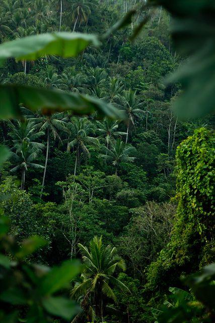 Džungla - Page 2 C72012e700db485522adb53e71e29a6d