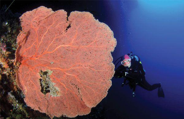 Aktiviti selaman dalam gua di dasar laut di Bau-Bau di Pulau Buton, Sulawesi Tenggara, Indonesia.