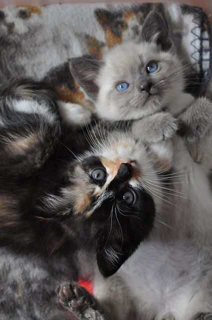 TumblrAnimal Baby, Meow, Pets, Baby Kittens, Baby Animal, Adorable, Box, Kitty, Baby Cat