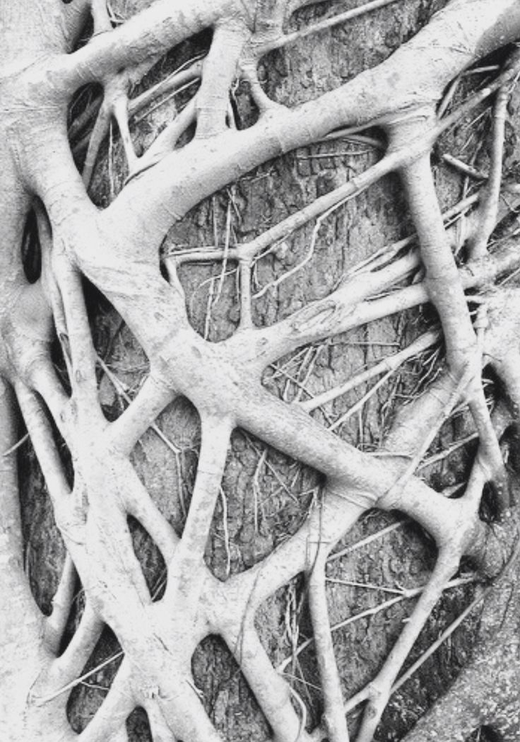 Wood Weave - intertwining tree branches; natural textures; organic pattern inspiration                                                                                                                                                     More