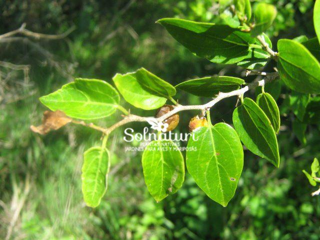 Plantas Nativas de Buenos Aires y alrededores: LISTA DE PLANTAS NATIVAS, SEMILLAS E INSUMOS