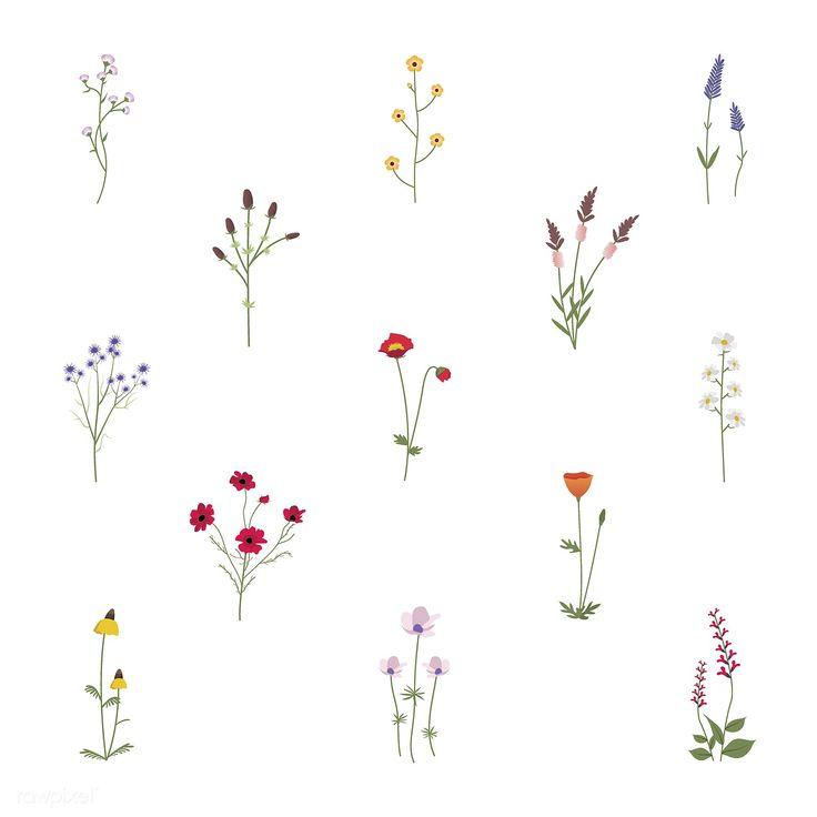 Wild flower vectors | free image by rawpixel.com