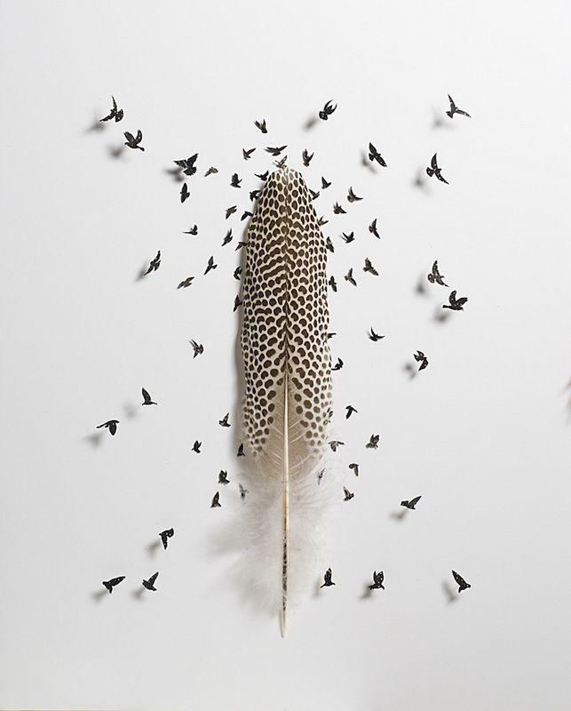 Artist Chris Maynard Creates Art Objects of Bird Feathers