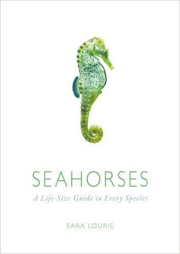 Image result for Seahorses A Life-Size Guide to Every Species by Sara A. Lourie 9781782403210